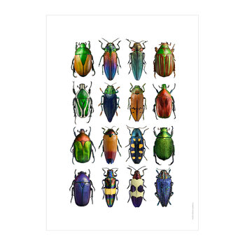 Multicolour Beetles Print