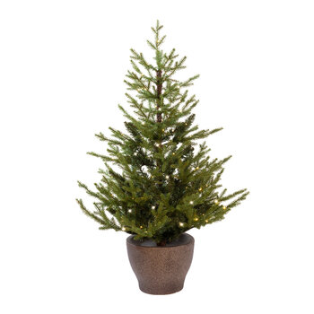 Norway Pre-Lit Potted Tree