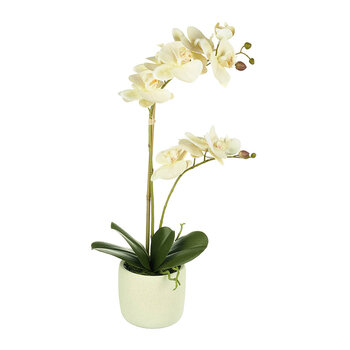 Faux Potted Phalaenopsis Orchid - Cream