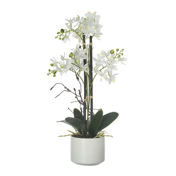 Faux Potted Phalaenopsis - White