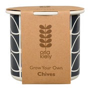 grow-your-own-chives-set
