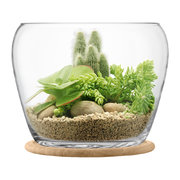 plant-curved-glass-pot-oak-base-giant