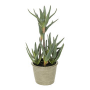 potted-aloe-plant-small
