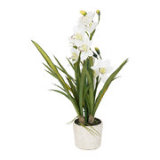 potted-orchid-cymbidium-white