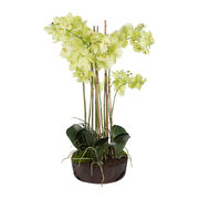 phalaenopsis-arrangement-in-soil-light-green