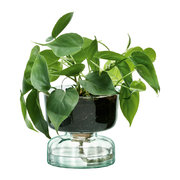 canopy-self-watering-planter-13cm