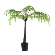 potted-fern-1