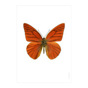 butterfly-print-appias-nero