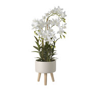 cycnoches-orchid-in-planter-large