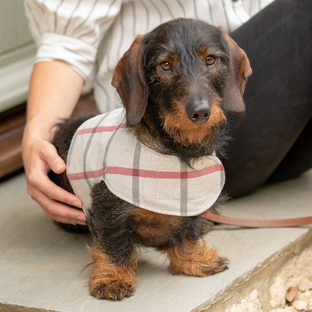 Mutts & Hounds - Nottingham Check Harness - Extra Small