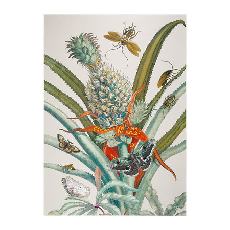 Vanilla Fly - Botanical Pineapple and Butterfly Print - 50x70cm