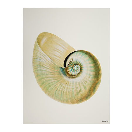 Vanilla Fly - Conch Shell Print - Pearl - 30x40cm