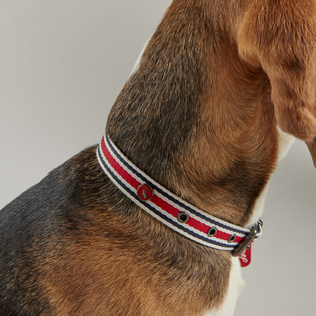Joules - Striped Dog Collar - Extra Large