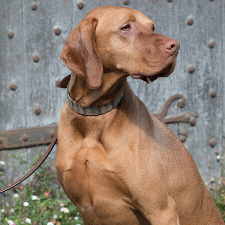 Mutts & Hounds - Balmoral Tweed/Tan Leather Collar - Large