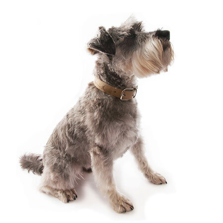 Mutts & Hounds - Oatmeal Check Tweed/Leather Collar - Medium