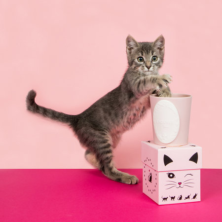 Ladurée - Limited Edition Lovely Cat Candle