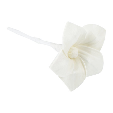 Agraria - Replenishment Flowers for Large Airessence Diffuser