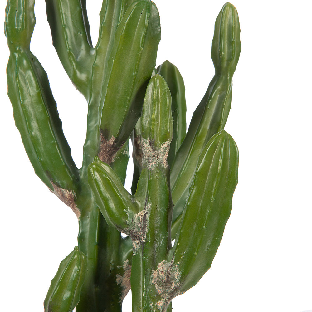 Parlane - Potted Desert Cactus - Small