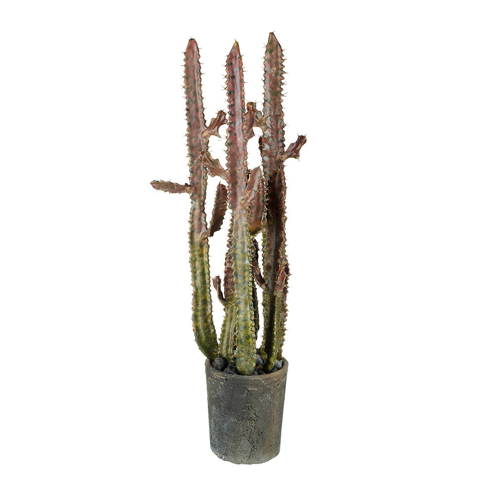 Parlane - Potted Euphorbia Cactus - Large