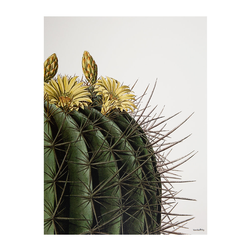 Vanilla Fly - Cactus with Yellow Flowers Print - 30x40cm