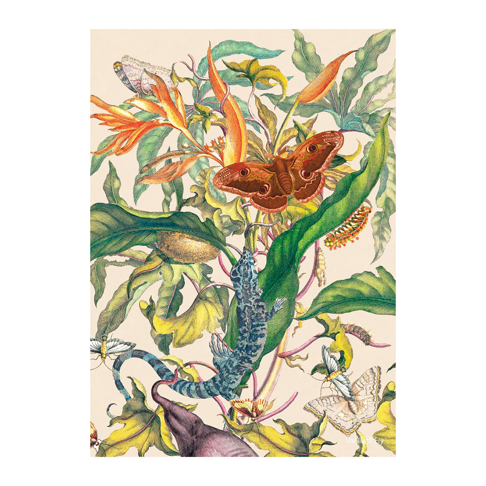 Vanilla Fly - Botanical Flower and Butterfly Print - 50x70cm