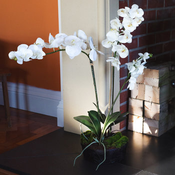 Small Phalaenopsis Arrangement