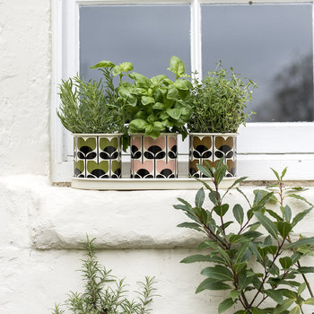 Set of 3 Herb Pots and Tray - Climbing Rose