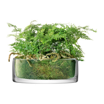 Stems Bowl/Planter - Clear
