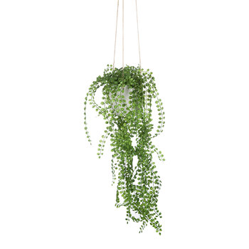 Hanging Pearl Spray Pot