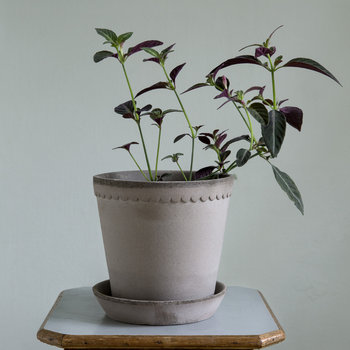 Helena Rose Tree Pot and Saucer - 14cm - Gray