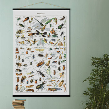 Insects Print