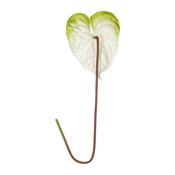 Artificial Anthurium Stem - White/Green