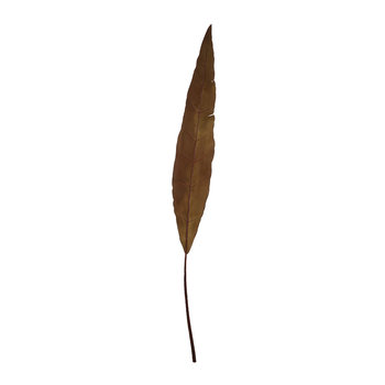 Artificial Banana Leaf - Burgundy