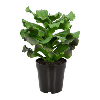 Artificial Succulent Pot - Green - 33cm