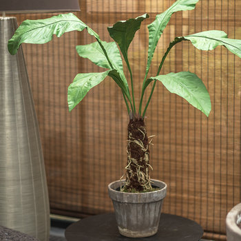 Artificial Alocasia Plant - Green