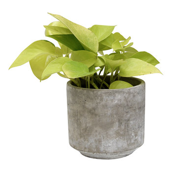 Tivoli Planter - Small - Cement