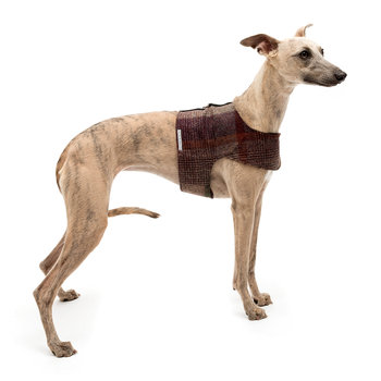 Tweed Harness - Grape