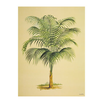 Palm Tree Print - 30x40cm