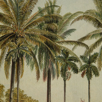 Palm Tree Scenery Print