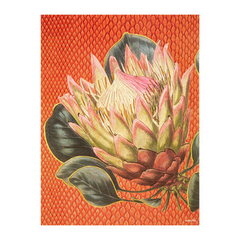 Protea Flower Print - Orange - 30x40cm