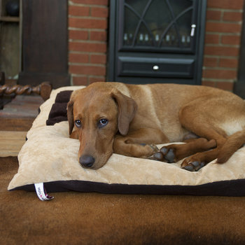 Doza Dog Bed - Medium - Tan