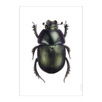 Beetle Print - Geotrupes Mutator