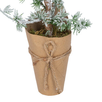 Larix Tree in Rustic Pot