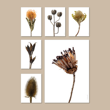 Wild Teasel Withered Print