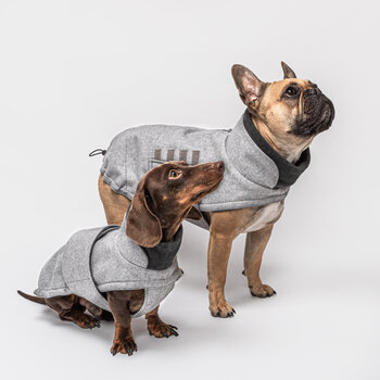 Brooklyn Dachshound Coat - Flannel Grey