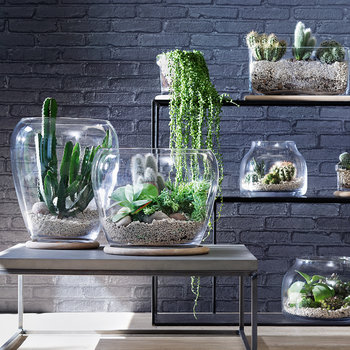 Plant Curved Glass Pot & Oak Base - Tall