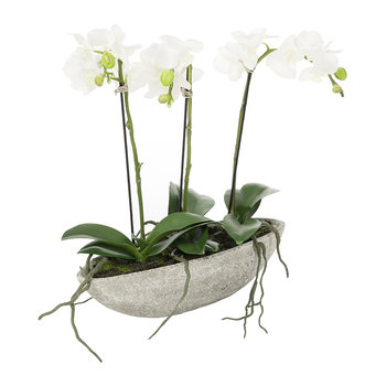 White Orchids in an Oval Pot - 3 Stems