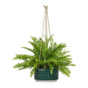 Sixties Stem Ceramic Hanging Pot - Evergreen - Large