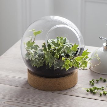Tabletop Terrarium With Cork Base - Glass