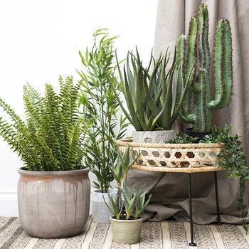 Potted Desert Cactus - Green